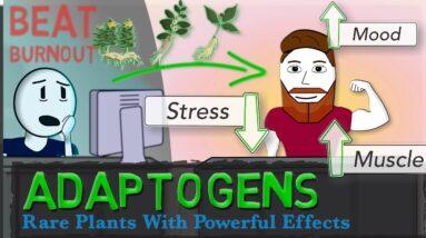 ADAPTOGENS EXPLAINED: Ginseng, Ashwagandha, Rhodiola + Science of Stress