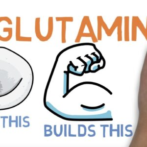 L GLUTAMINE : WHAT DOES GLUTAMINE DO